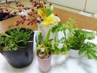 我が家の植物達[1].JPG